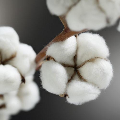 Cotton Conference 2020 Imprint